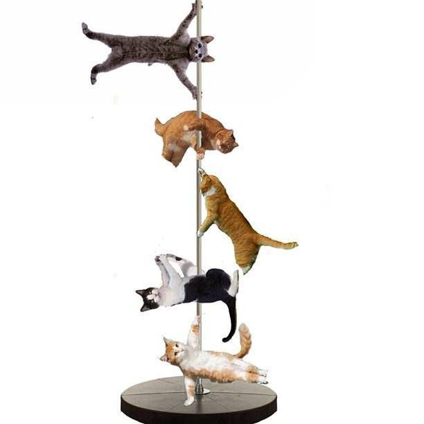 Cat Eating Pole